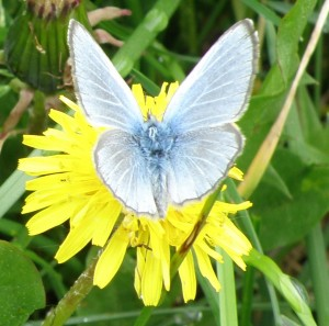 Butterfly - Wonder